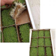 Hanfmatten und Hanfpads – Anzuchtvlies für Samen/Microgreens